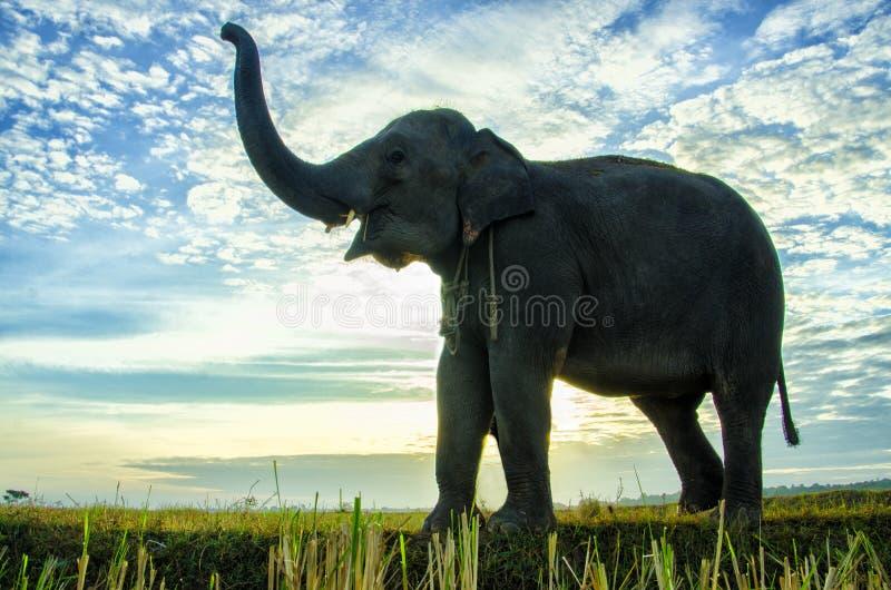 Een olifant met de blauwe hemel stock foto