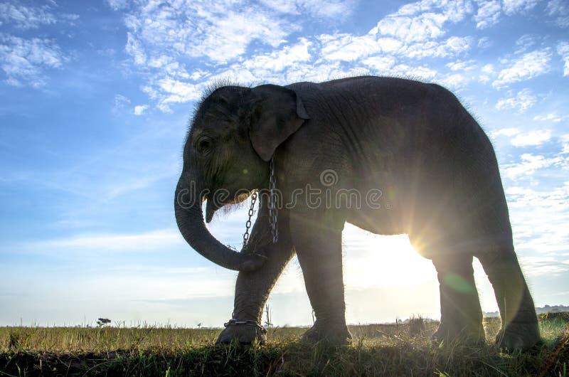 Een olifant met de blauwe hemel royalty-vrije stock afbeeldingen