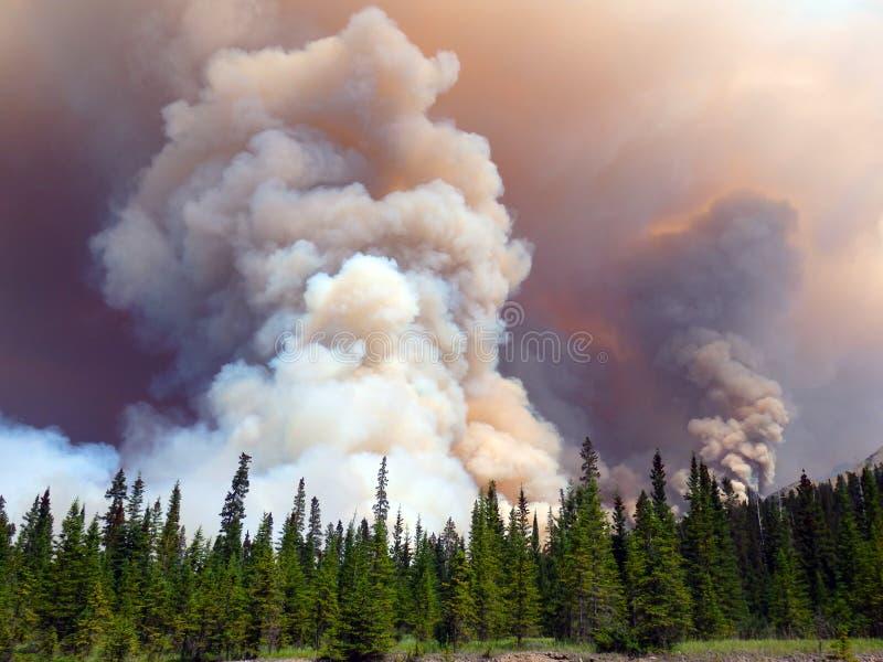 Een ongelooflijke bosbrand in de Rotsachtige Bergen stock foto
