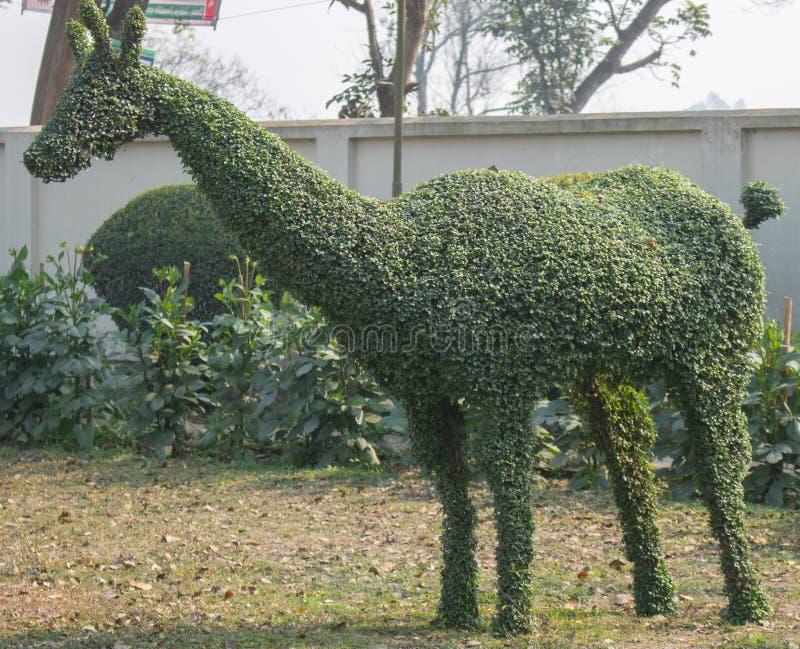 Een oog dat groene topiary van herten vangt stock fotografie