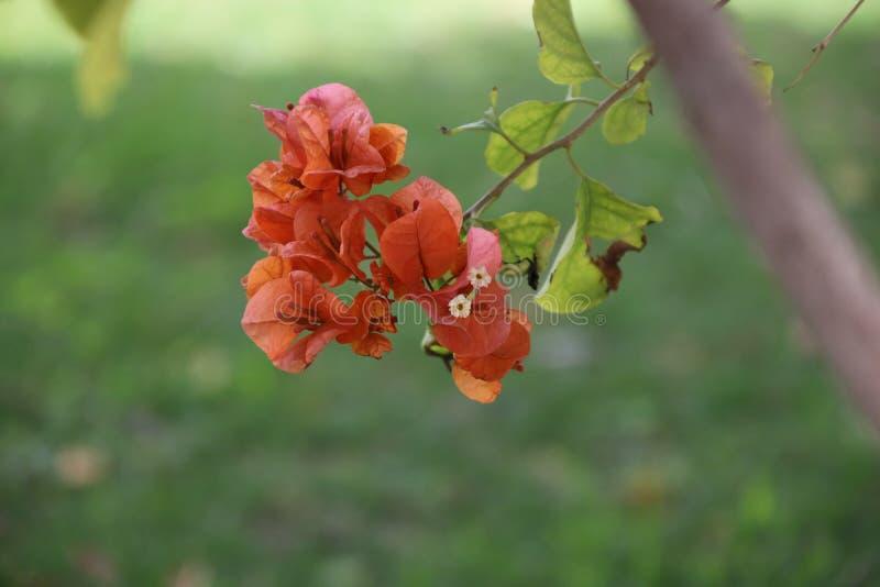 Een oranje bloem op een tak royalty-vrije stock foto