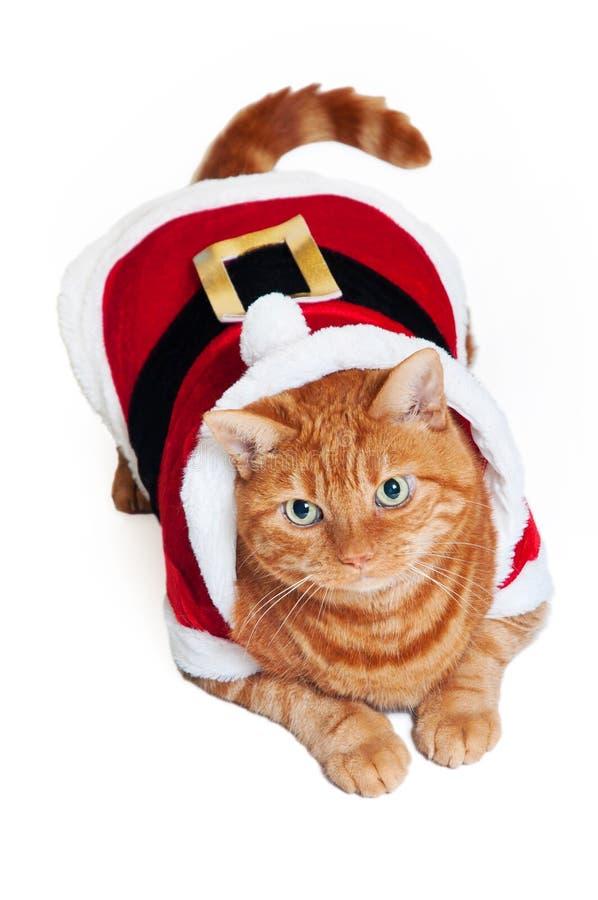 Een oranje kat in een rode en witte uitrusting van de Kerstman stock afbeelding