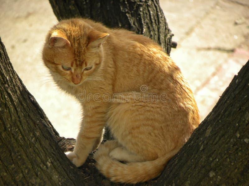 Een oranje kat op een boom stock foto