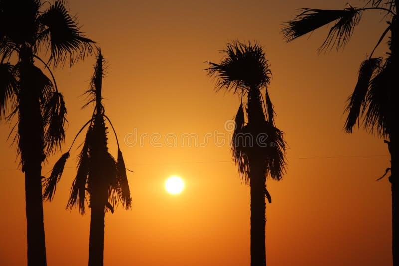 Een oranje zonsondergang tussen palmen stock fotografie