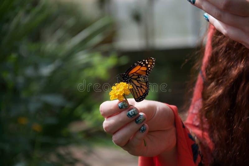 Een oranje, zwart-witte vlinder op een gele bloem in de hand van een dame royalty-vrije stock fotografie