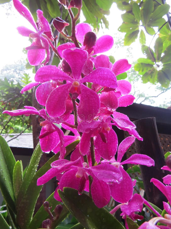 Een orchidee royalty-vrije stock afbeeldingen