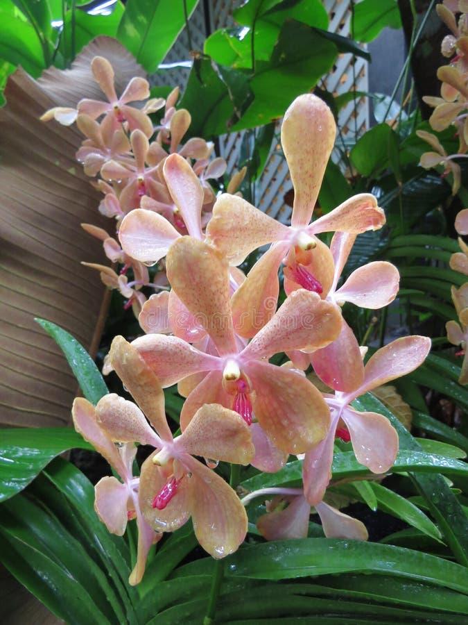 Een orchidee stock afbeelding