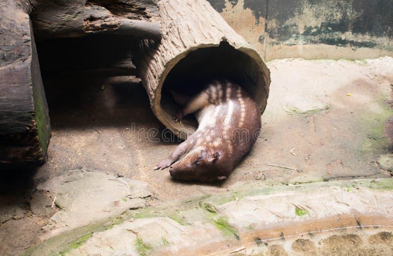 Een Otterslaap in dierentuin stock foto