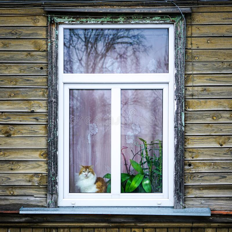 Een oud blokhuisvenster, een kattenzitting op de venstervensterbank, cactussen en succulents groeit in potten stock afbeeldingen