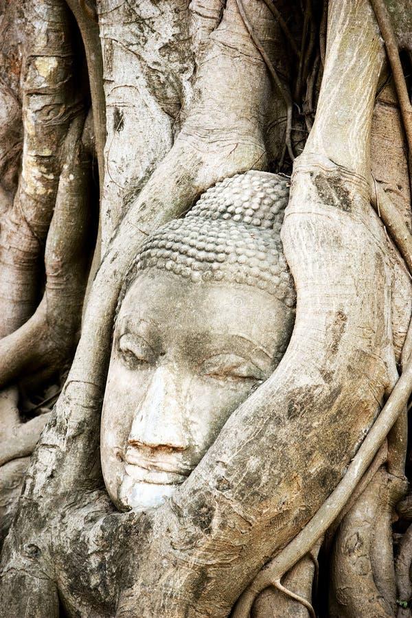 Een oud hoofd van Boedha binnen boomwortel stock foto
