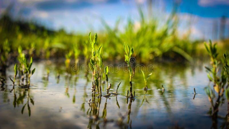 Een oud overstroomd moeras dicht omhoog royalty-vrije stock fotografie