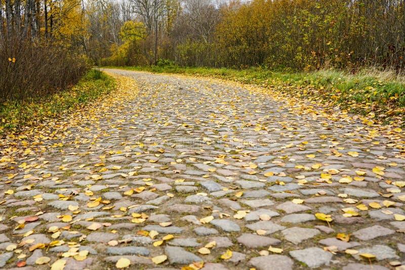 Een oude bedekte gebogen die weg, met gele bladeren in de herfst wordt behandeld stock afbeeldingen