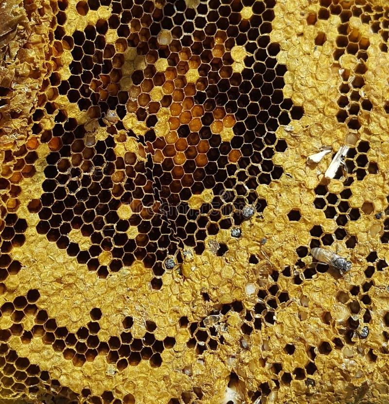 Een oude bijenkorf stock afbeelding