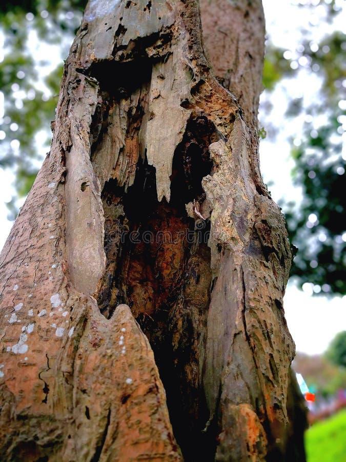 Een oude boom royalty-vrije stock fotografie