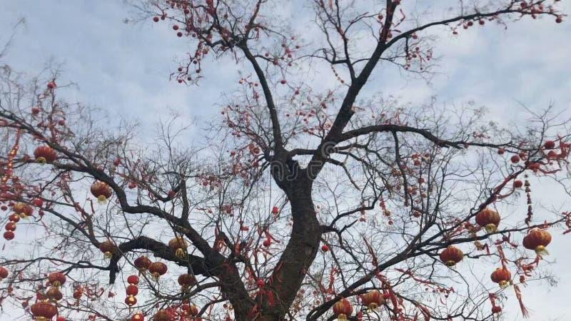 Een oude boom is behandeld met kleine lantaarns royalty-vrije stock foto's