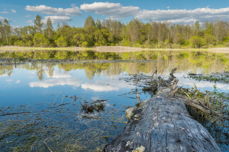 Een oude boom zonder schors ligt van kust aan meer, in water wijst op een blauwe hemel met wolken en op een horizonlijn met een b royalty-vrije stock fotografie