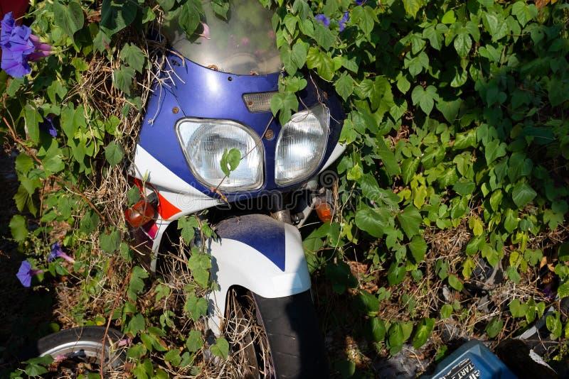 Een oude purpere roestende motor wordt meestal begraven door heldergroen gebladerte royalty-vrije stock foto's