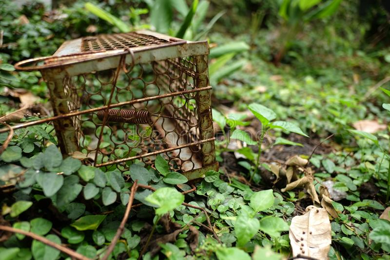 Een oude roestige rattenval op het groene gras en de grond royalty-vrije stock fotografie