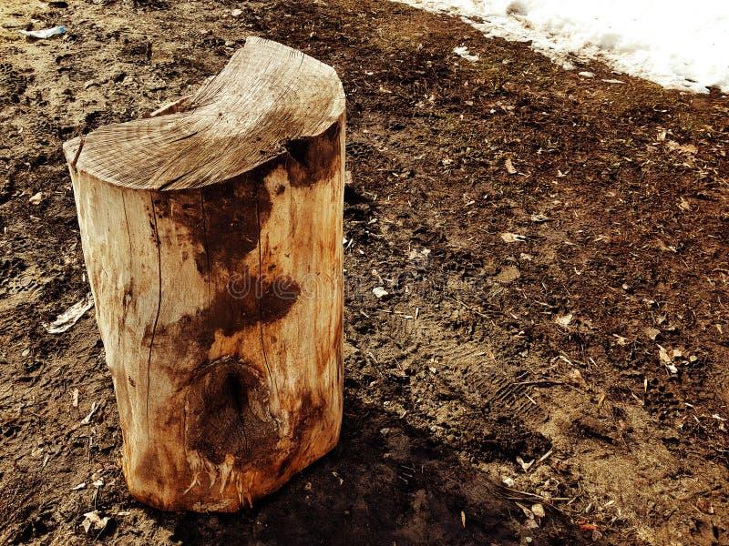 Een oude stomp of een besnoeiing van een boom tegen een achtergrond van smeltende sneeuw en aarde in de lente of de winter stock afbeelding