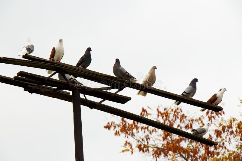 Een paar duiven die op een toppositie op een achtergrond van witte hemel zitten royalty-vrije stock foto's