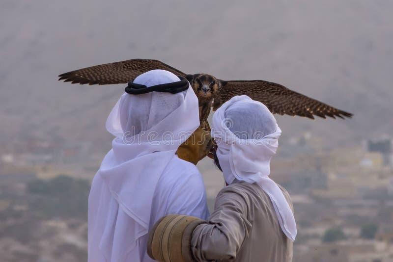 Een paar Emirati-valkenieren houdt een peregrine peregrinus van valkfalco in de Verenigde Arabische Emiraten de V.A.E een cultuur stock afbeeldingen