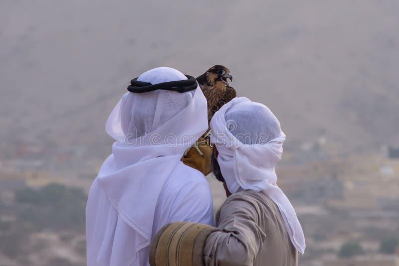 Een paar Emirati-valkenieren houdt een peregrine peregrinus van valkfalco in de Verenigde Arabische Emiraten de V.A.E een cultuur stock foto's