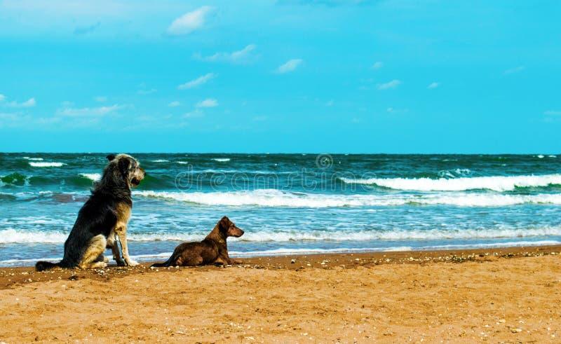 Een paar honden op de kust royalty-vrije stock afbeeldingen