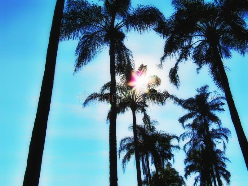 Een paar lijnen van palmen stock foto