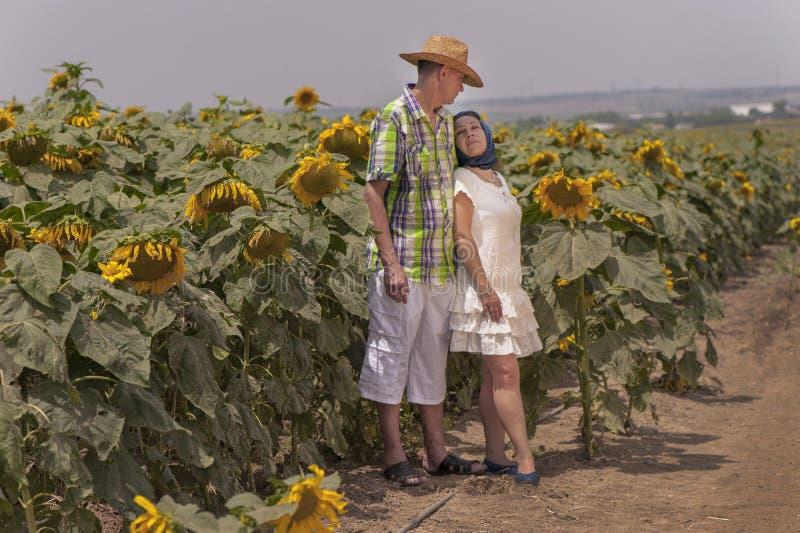 Een paar op het zonnebloemengebied stock afbeeldingen