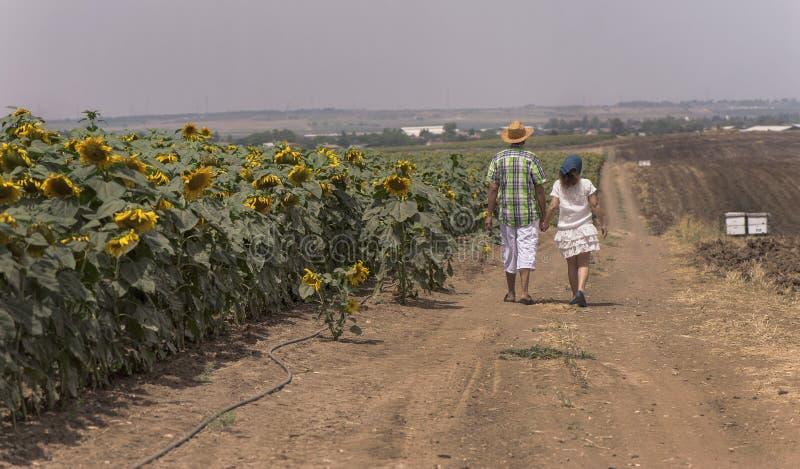 Een paar op het zonnebloemengebied royalty-vrije stock afbeelding