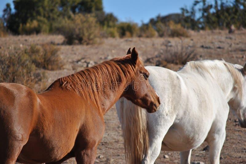 Een paar paarden royalty-vrije stock foto