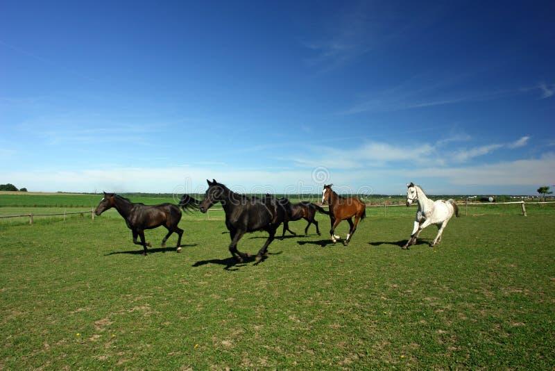 Een paar paarden op een gebied. royalty-vrije stock afbeeldingen