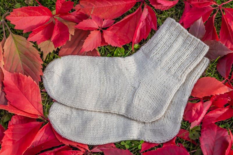 Een paar wollen warme gebreide witte sokken is op een mooie achtergrond van heldere rode meisjesachtige druivenbladeren stock afbeelding