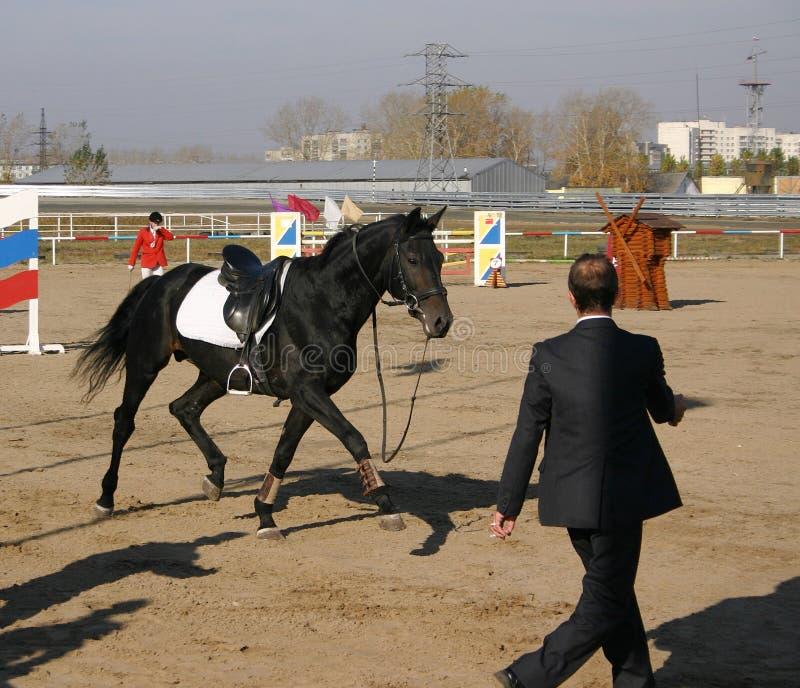 Een paard dat na een sportman wegloopt viel weg stock afbeeldingen