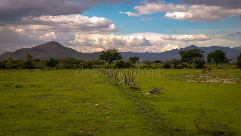 Een paard die op een gebied dichtbij Magdalena Ocotlan, Oaxaca, Mexic weiden royalty-vrije stock afbeelding