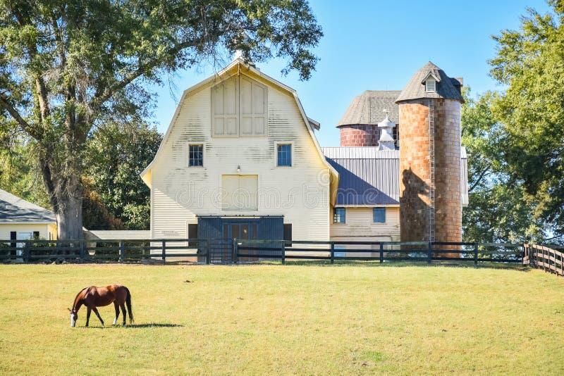 Een paard die tijdens de lente in een weide weiden royalty-vrije stock afbeeldingen