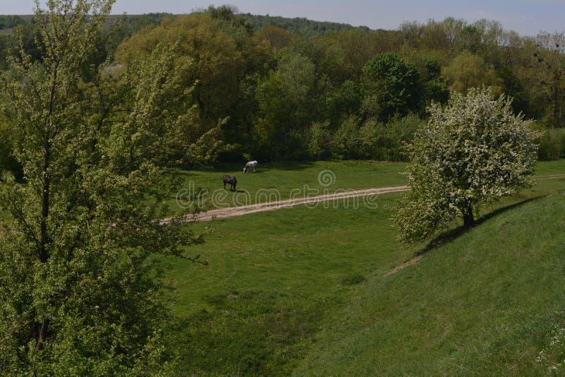 Een paard en een koe eten gras dichtbij een groen dicht bos royalty-vrije stock afbeeldingen