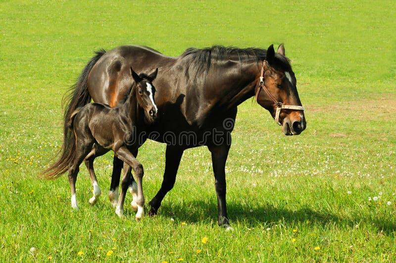 Een paard met een babyveulen royalty-vrije stock afbeelding