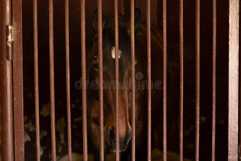 Een paard met mooie ogen staart weg in de afstand Een droevig eenzaam paard zou kunnen zijn stock fotografie