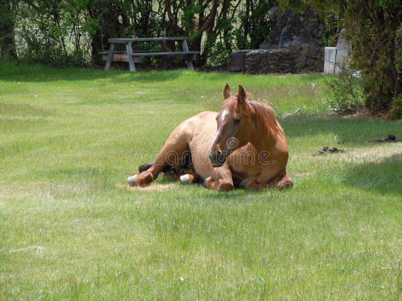 Een Paard onbeweeglijk stock foto's