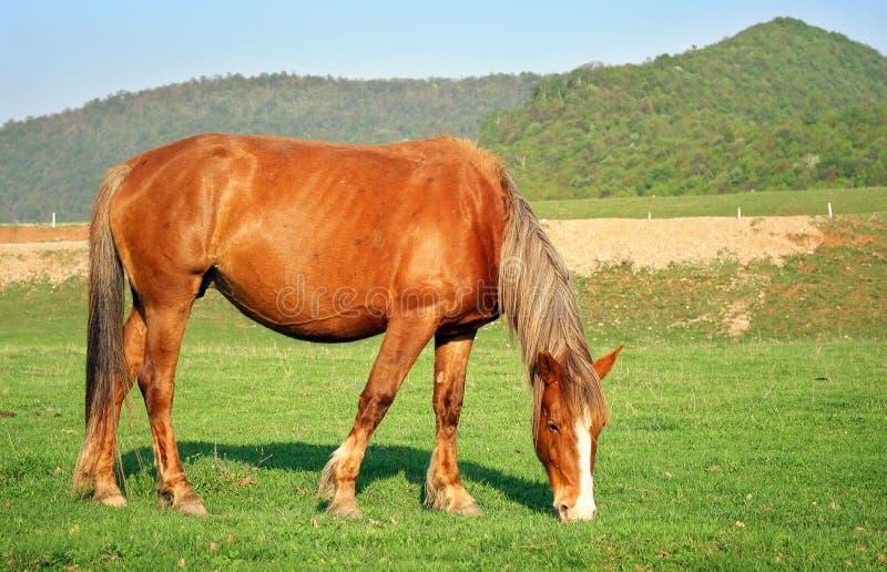 Een paard op een vallei stock fotografie
