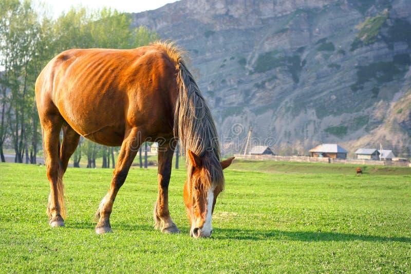 Een paard op een vallei stock afbeelding