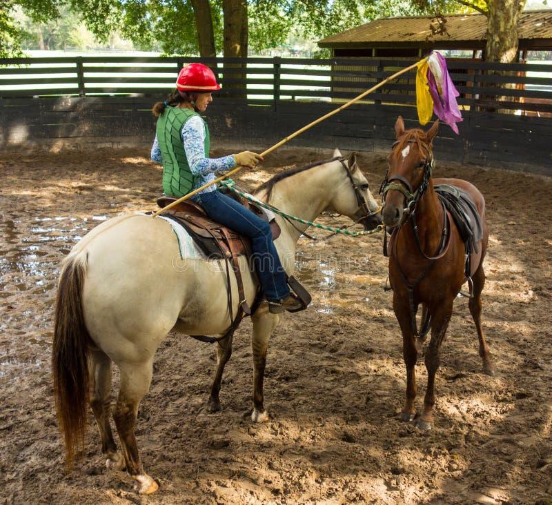 Een paardtrainer die een jaarling met behulp van haar poney opleiden stock fotografie