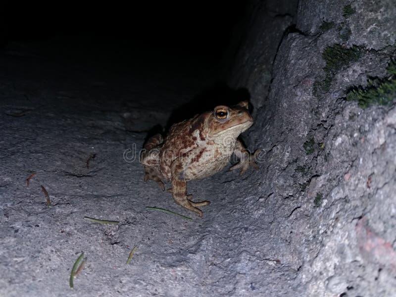 Een pad bij nachtzitting bij stedelijk milieu op concrete trede stock fotografie