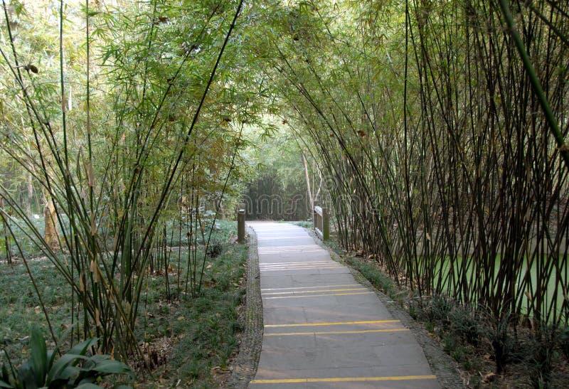 Een pad door bamboo in Chengdu Panda Reserve Chengdu Research Base van Giant Panda Breeding in Sichuan, China stock foto
