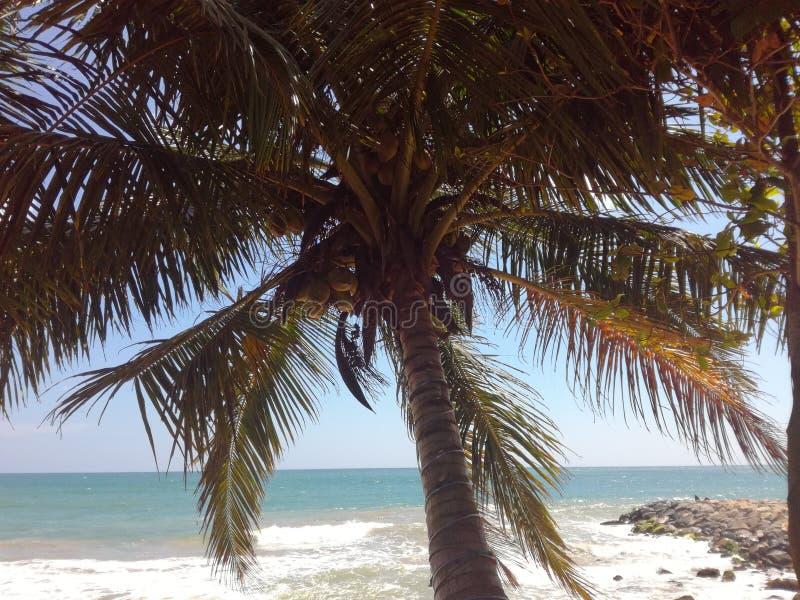 Een palm op een mooi strand stock fotografie