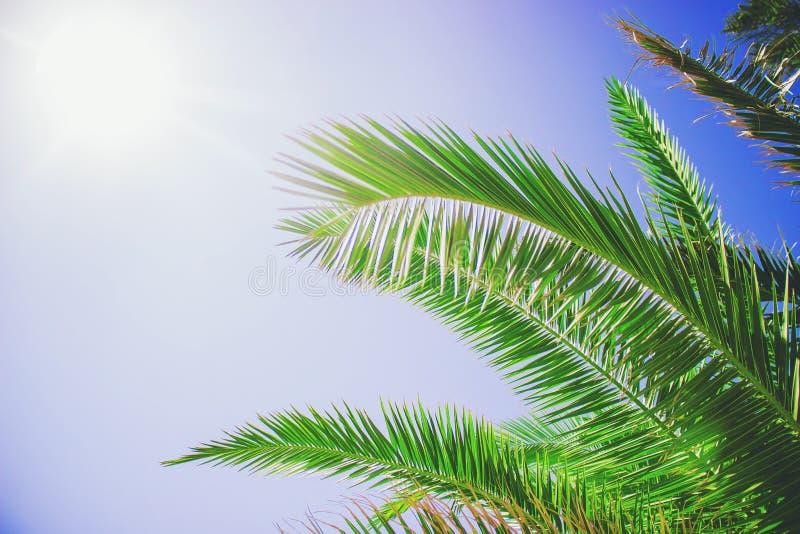 Een palm tegen de hemel royalty-vrije stock foto's
