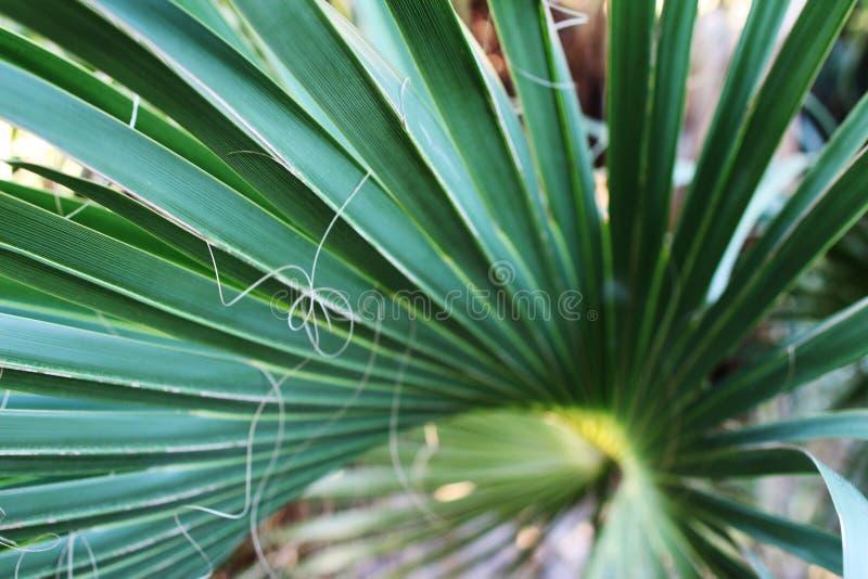Een palmboomblad, dicht royalty-vrije stock afbeelding
