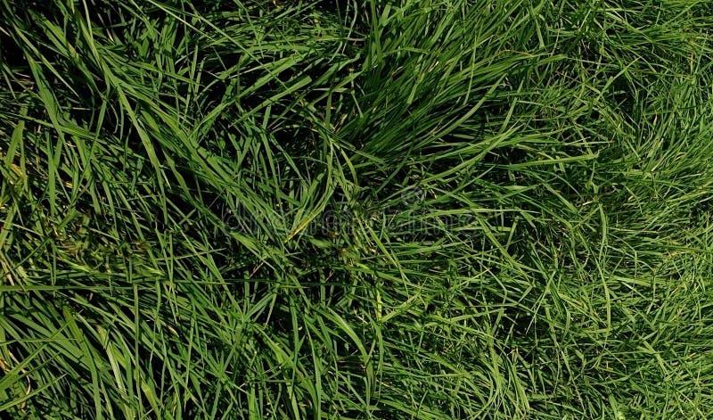 Een paneel van gras stock foto