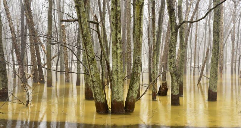 Een panorama van een overstroomd bos met bezinningen van bomen royalty-vrije stock fotografie